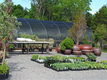 photo of plants with greenhouse in the background